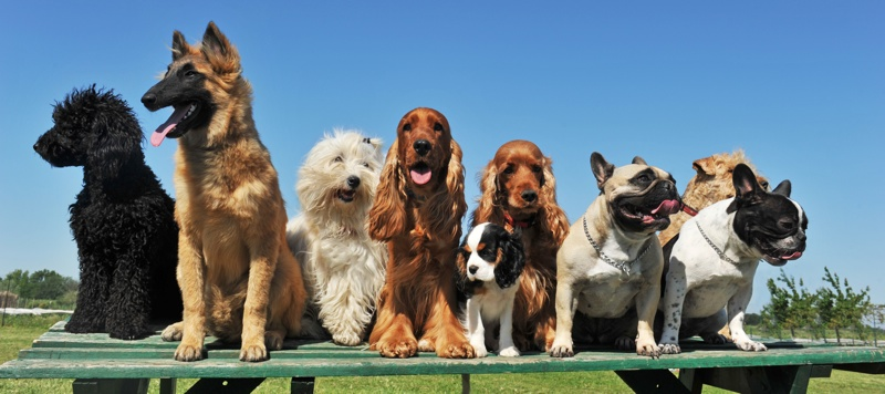 great web links from chippers dog training