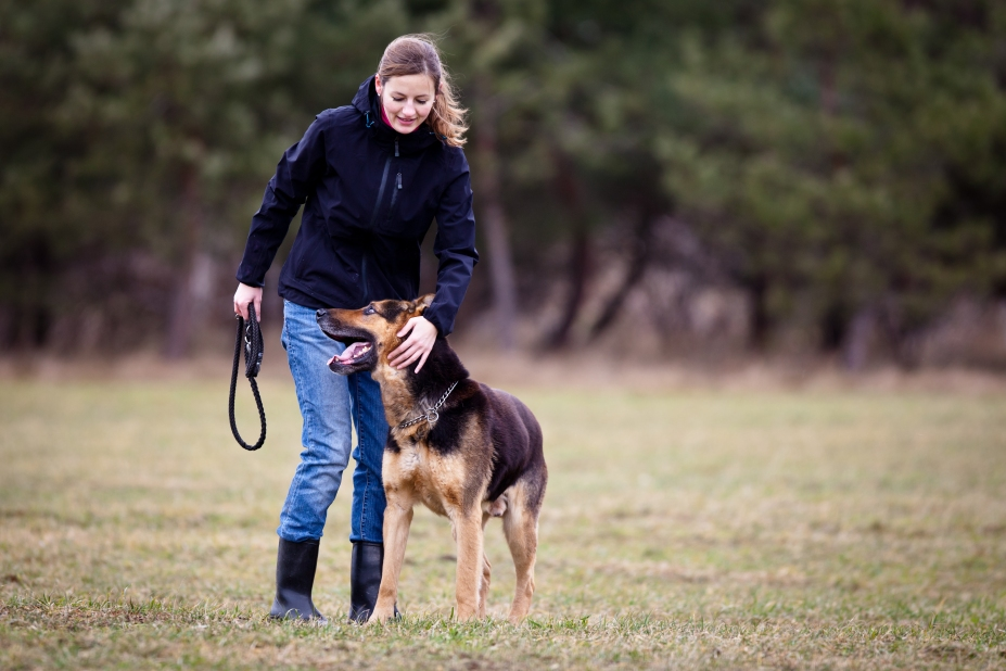 German Shepherd recall training