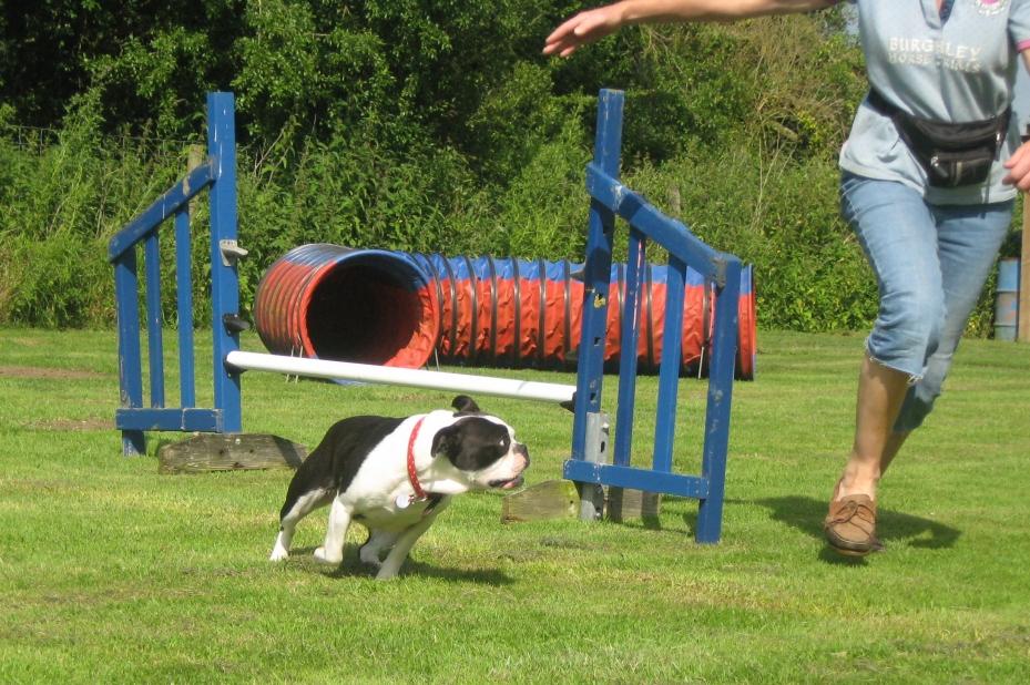 Good Citizen Dog Training Scheme